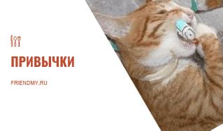 Лень, привычки. Кот чистит зубы, это хорошая привычка. Часть статьи про привычки.