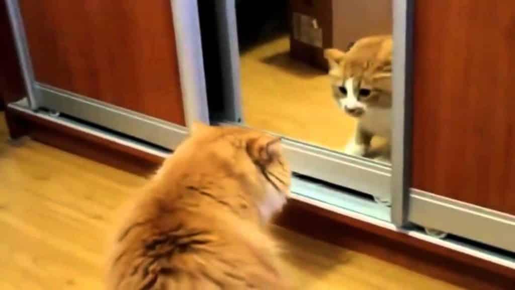 Лень, кот увидел себя в зеркале и ужаснулся. Пора что-то менять.
