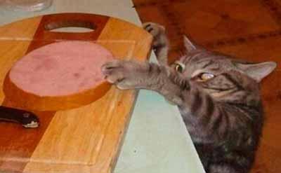 Кот пытается стянуть колбасу со стола. Он очень голодный.